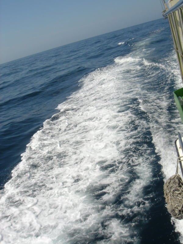 賞鯨船的船尾浪濤。