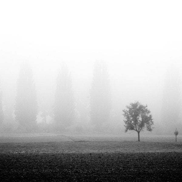 FOG Photography 03 22