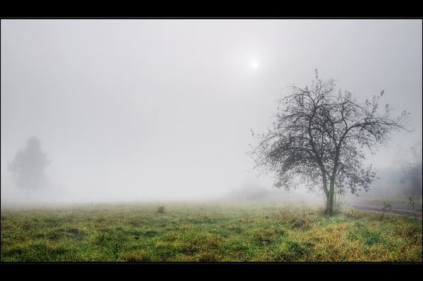 FOG Photography 04 21