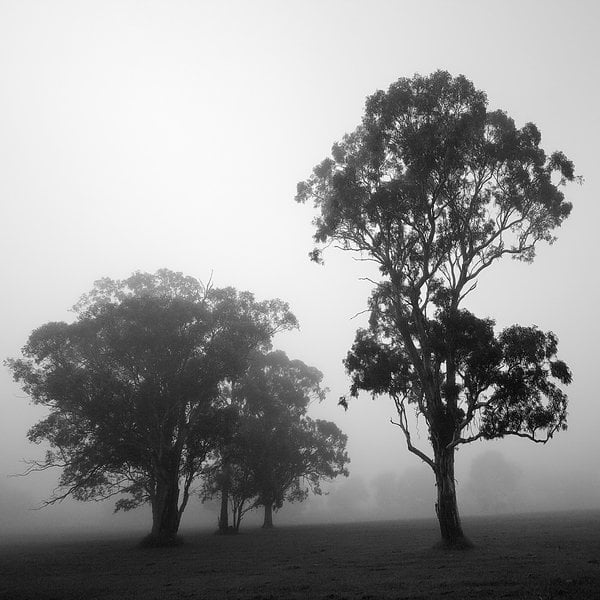 FOG Photography 12 13