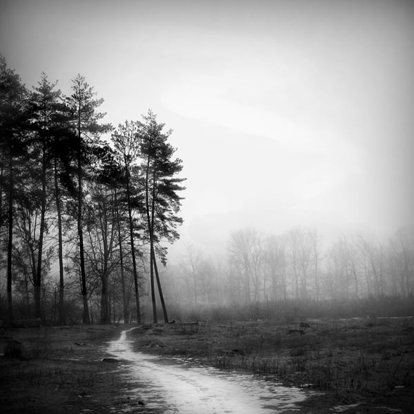 FOG Photography 13 12