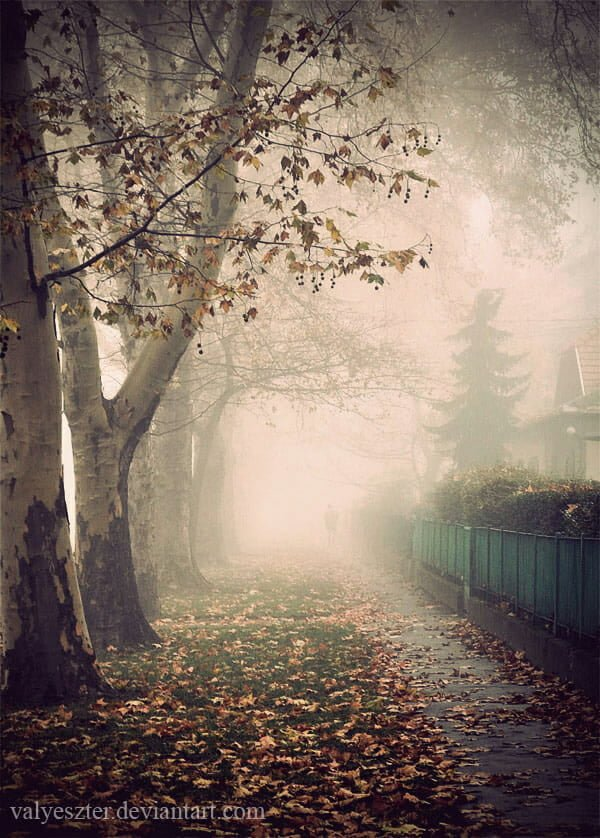 FOG Photography 22 3