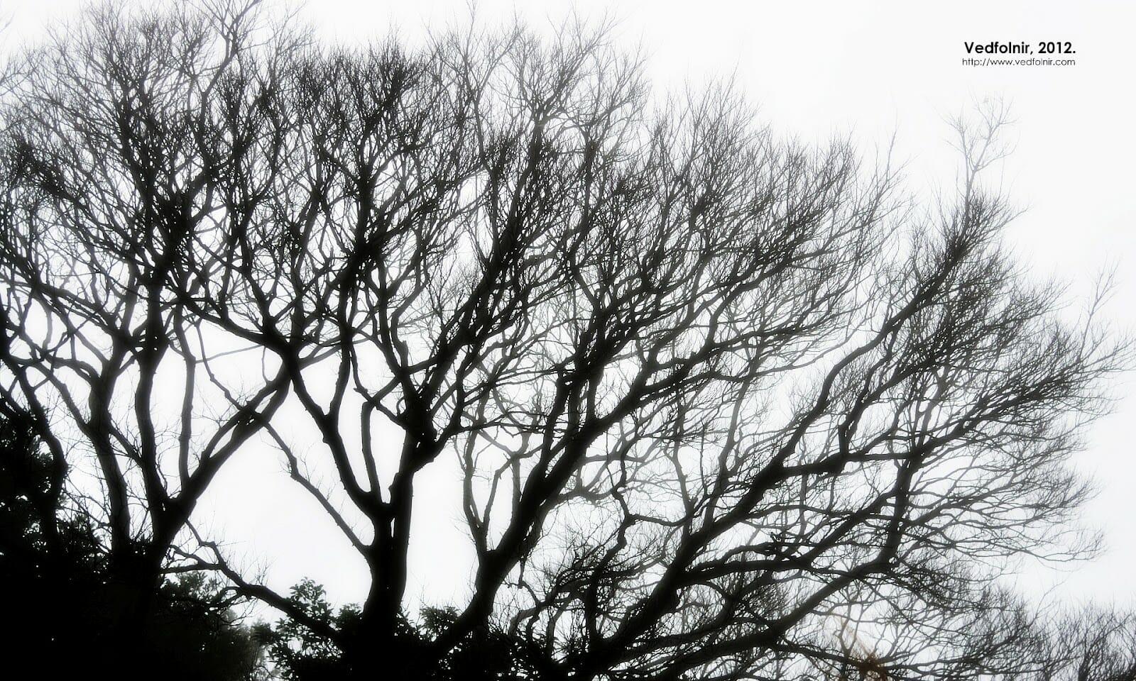 樹梢上的白霧