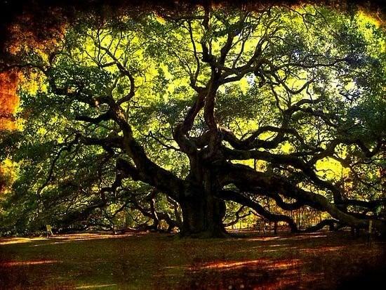 TOP 10 World Tree 01 自然奇觀:讓人目瞪口呆的全球10大神樹