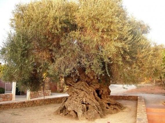 TOP 10 World Tree 02 自然奇觀:讓人目瞪口呆的全球10大神樹