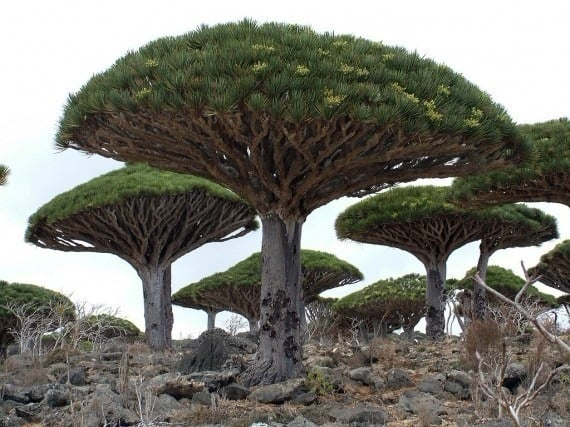 TOP 10 World Tree 03 自然奇觀:讓人目瞪口呆的全球10大神樹