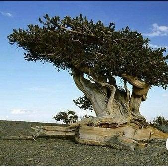 TOP 10 World Tree 07 自然奇觀:讓人目瞪口呆的全球10大神樹
