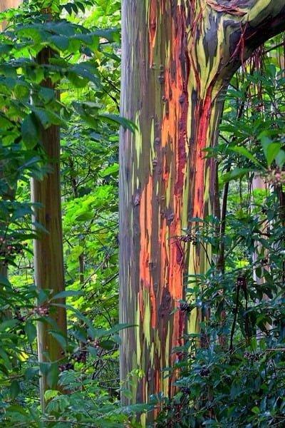 TOP 10 World Tree 09 自然奇觀:讓人目瞪口呆的全球10大神樹