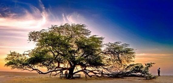 TOP 10 World Tree 10 自然奇觀:讓人目瞪口呆的全球10大神樹