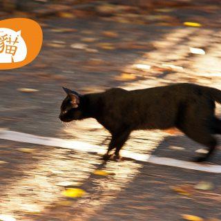 淡水貓_奔馳中的黑貓_Vedfolnir