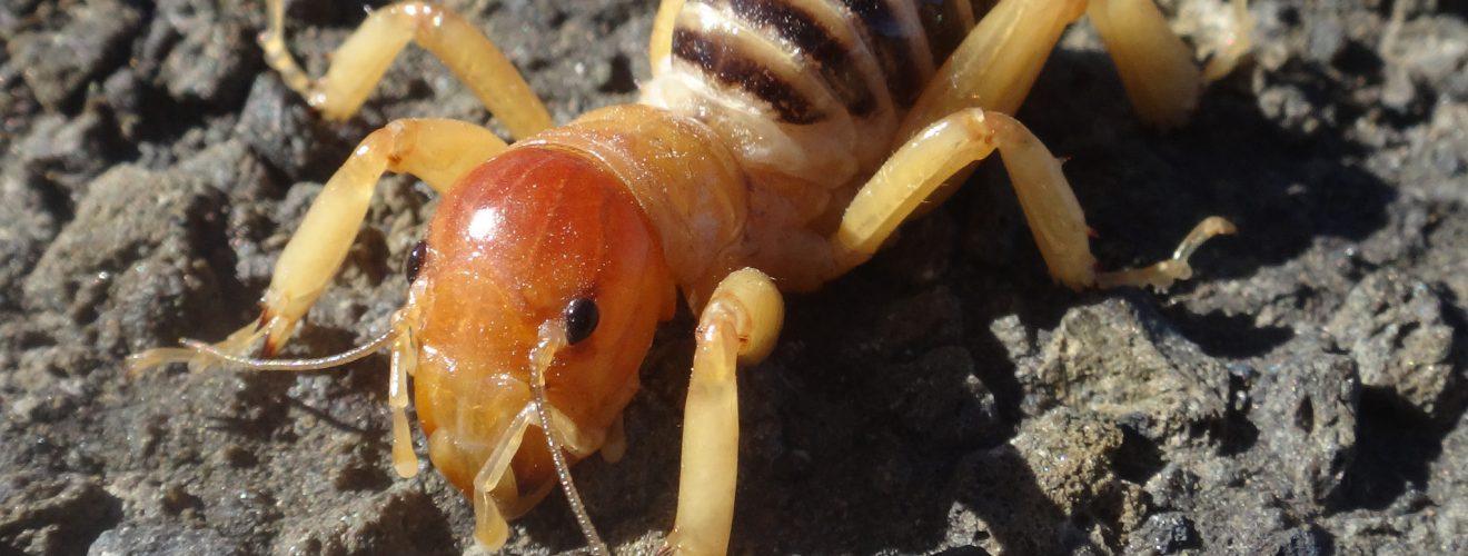 mutant antbee 20141024 螞蟻、蜘蛛與蟑螂,感謝神