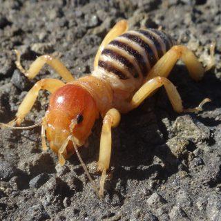 mutant antbee 20141024 點亮生活|螞蟻、蜘蛛與蟑螂,感謝神