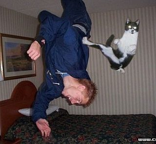正在教訓貓奴的貓