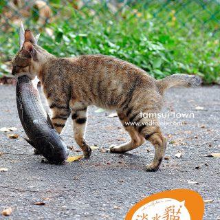 淡水貓-淡水河捕魚中-虎斑貓-Vedfolnir