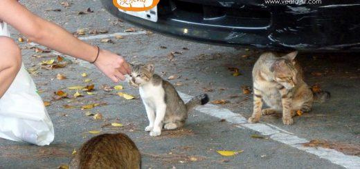 淡水貓之不見貓時刻