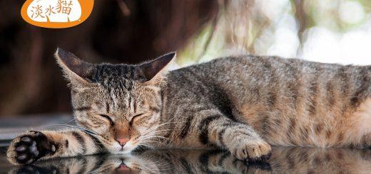 淡水-河岸-街貓-小黑手-Tamsui-Street-Cat-vedfolnir