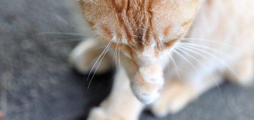 淡水-河岸-街貓-Tamsui-Street-Cat-vedfolnir