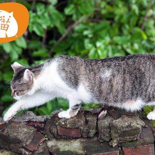 淡水-街貓-Tamsui-River-Street-Cat-Vedfolnir