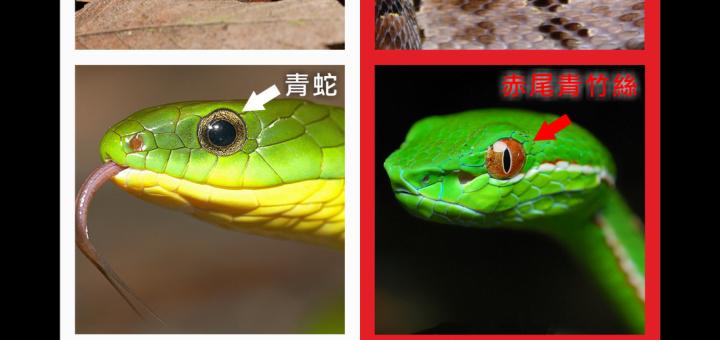 Danger-Animal-Biological-Species-Identification-method-Vedfolnir