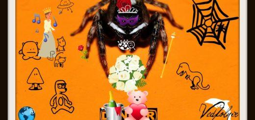 Spider macro photography 小蜘蛛與我的同居日記|生態微距攝影