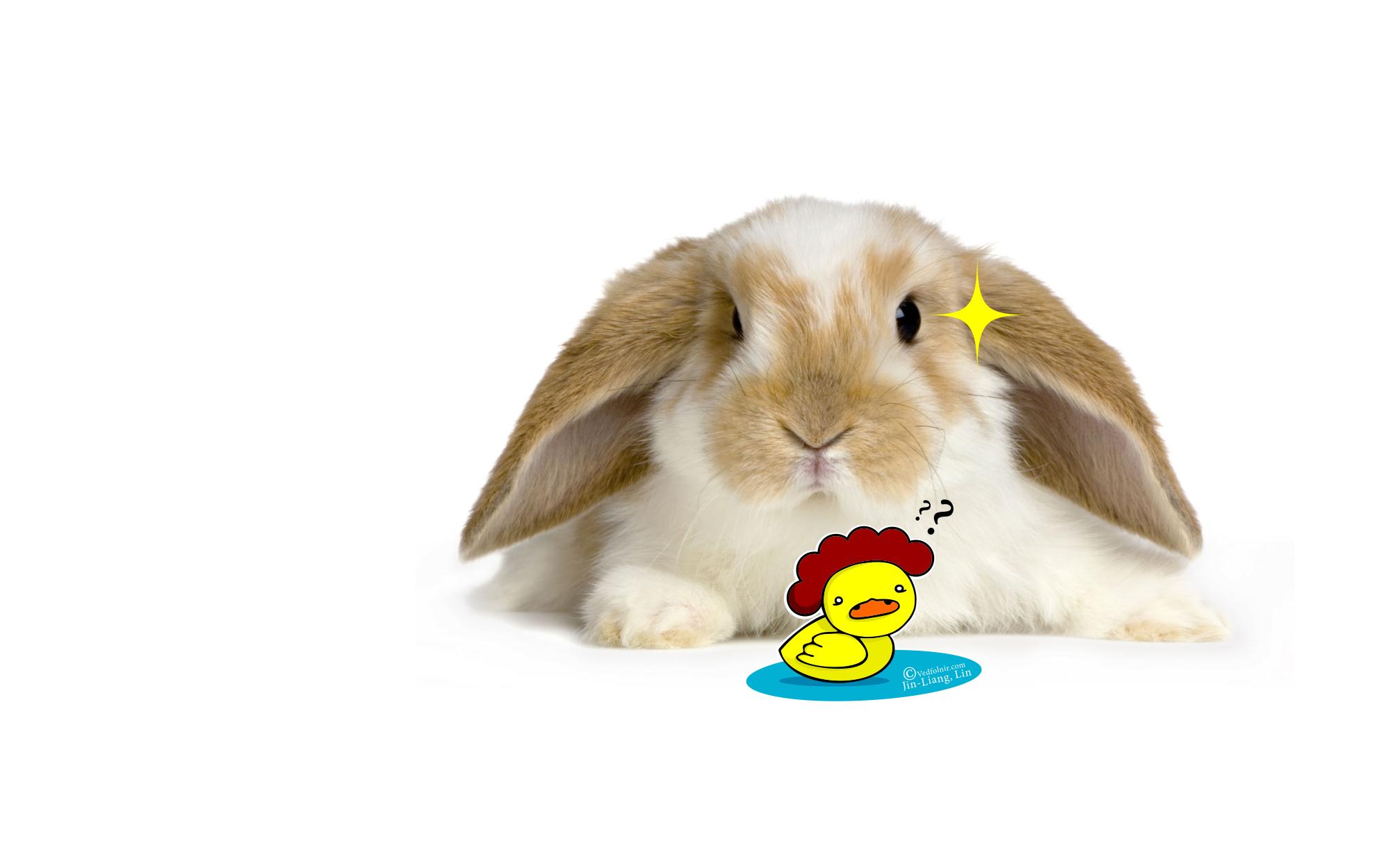 天兔颱風大戰黃色小鴨鴨