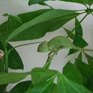 CB chameleon 2013 爬蟲學:爬蟲個體來源的專業術語教學