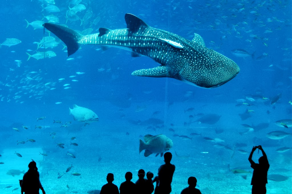 The Ocean Park of Okinawa, Japan.