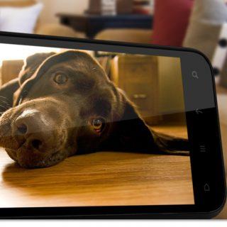HTC-Smart-Phone-Dog