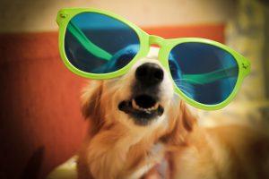 Glasses_Dog_Valeria_Zolotoreva
