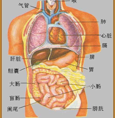 身體部位與疾病關係