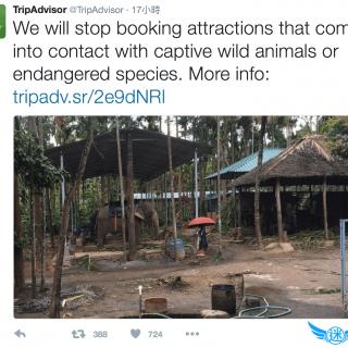 TripAdvisor stop booking attractions animals 響應 TripAdvisor 停售接觸野生動物與瀕危物種的觀光旅遊、動物秀與動物表演行程