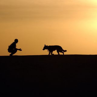 love between pet dog and owner in sunset 161125 癌末狐狸犬 毛小孩媽媽號召眾主人們一起去旅行?