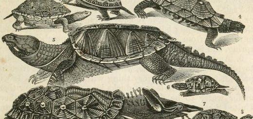 1860 firstfifthreader05will tortoise 說文解字:臺灣人的龜毛(閩南方言)