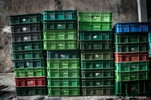 Eggs_packed_plastic_baskets_linjinliang