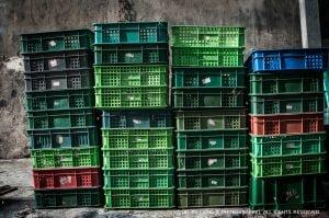 Eggs_packed_plastic_baskets_linjinliang