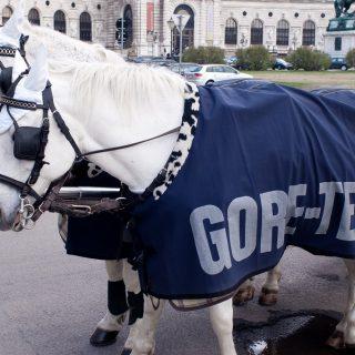 Gore tex horse advertsitment 20110405 GoreTex 狗鐵絲防風寒外套購買 3 重點|戶外登山裝備概念篇
