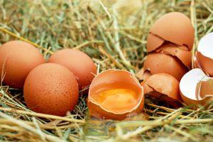 egg-chicken-eggs-raw-eggs-eggshell
