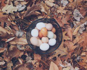 white_chicken_eggs_brown_red_Autumn_maple_leaf