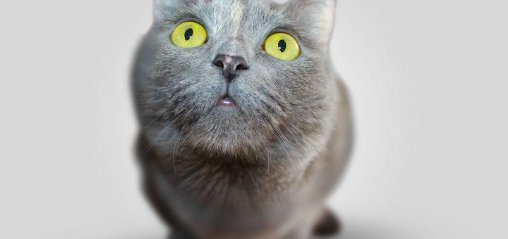 animal pet eyes grey comment review look discuss 臺灣血液基金會有賺錢臭了嗎?你動搖醫療基礎就不行,那是救命的。
