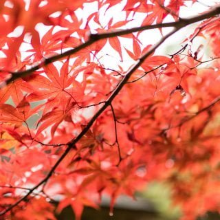 201711 Ibaraki Tochigi Gunma Japan Travel By RentalCar 22 日本旅行:北海道札幌的 5 天旅遊行程初步規劃