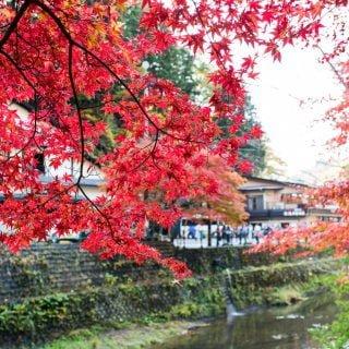 201711 Ibaraki Tochigi Gunma Japan Travel By RentalCar 34 日本自駕旅遊/北關東三縣「茨城、櫪木、群馬」秋天美食、溫泉與瀑布秘境百景(精選照片分享)