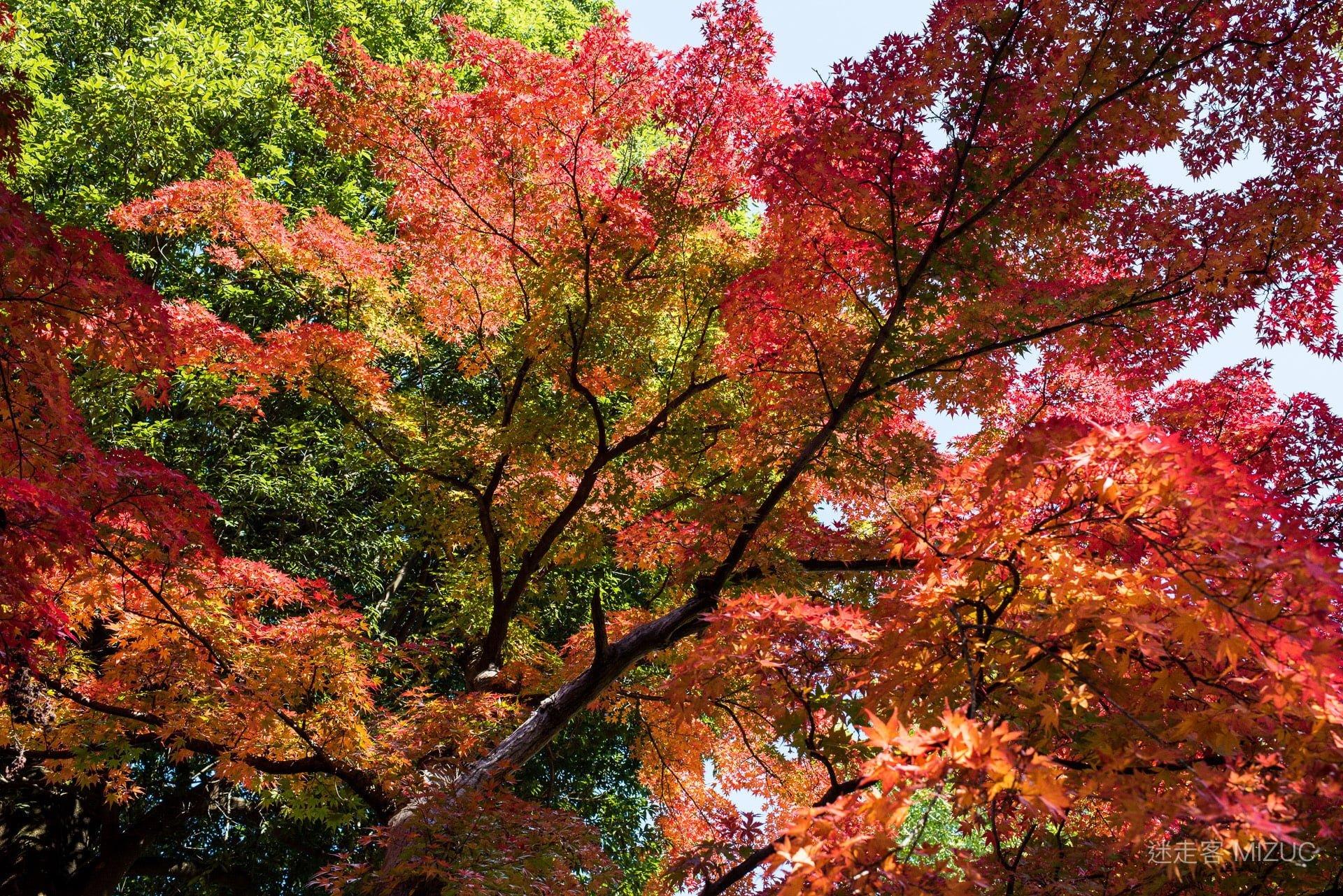 201711 Ibaraki Tochigi Gunma Japan Travel By RentalCar 85 日本自駕旅遊/北關東三縣「茨城、櫪木、群馬」秋天美食、溫泉與瀑布秘境百景(精選照片分享)