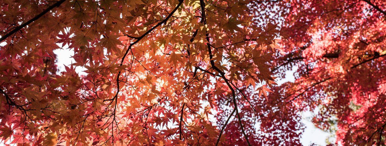 201711 Ibaraki Tochigi Gunma Japan Travel By RentalCar 86 日本旅行:北海道札幌的 5 天旅遊行程初步規劃