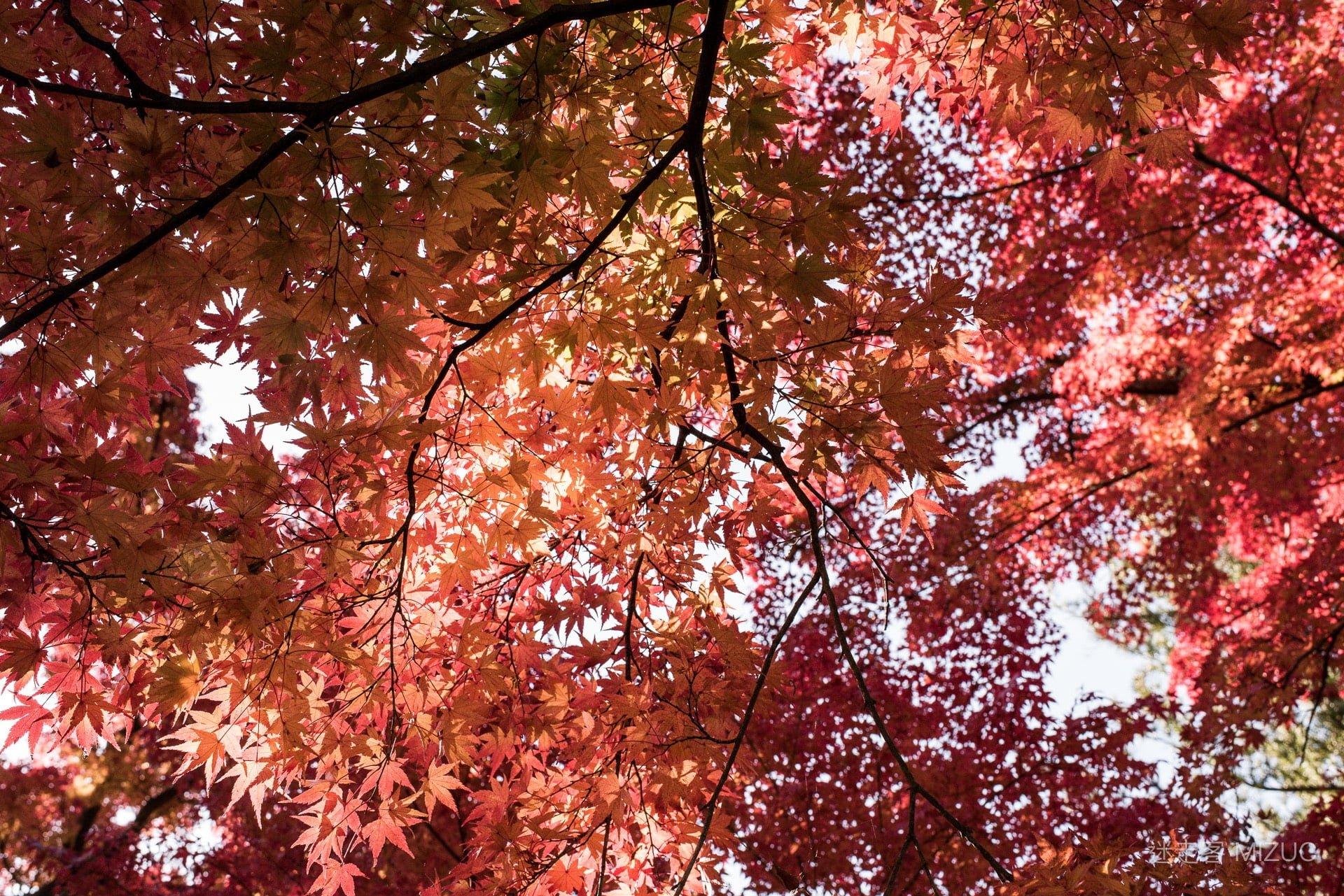 201711 Ibaraki Tochigi Gunma Japan Travel By RentalCar 86 日本自駕旅遊/北關東三縣「茨城、櫪木、群馬」秋天美食、溫泉與瀑布秘境百景(精選照片分享)