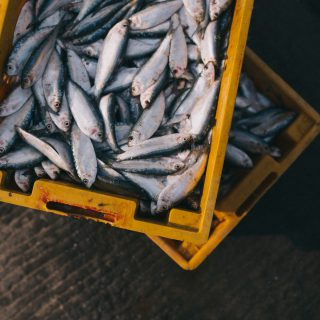 gray fishes on yellow crate sea food 美國短片「教魚爬樹」指學校教育耽誤孩子一生天賦的邏輯謬論