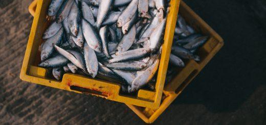 gray fishes on yellow crate sea food 菲律賓/旅遊警告/霍亂疫情升溫 國際旅客需注重飲食衛生