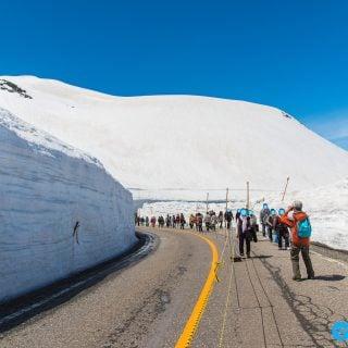 travel snow valley wall Tateyama Kurobe Japan 日本富山/立山黑部(雪之大谷)2017 年開山日確定!