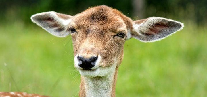 funny look ears female deer stupid 迪化街年貨購物,買櫻桃巧遇黑心商人嚇到我咬手手(台北踩雷篇)