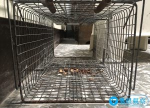 捕鼠器陷阱:抓老鼠專用鐵籠。