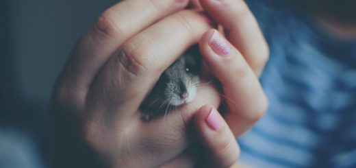 close up of woman holding a hamster